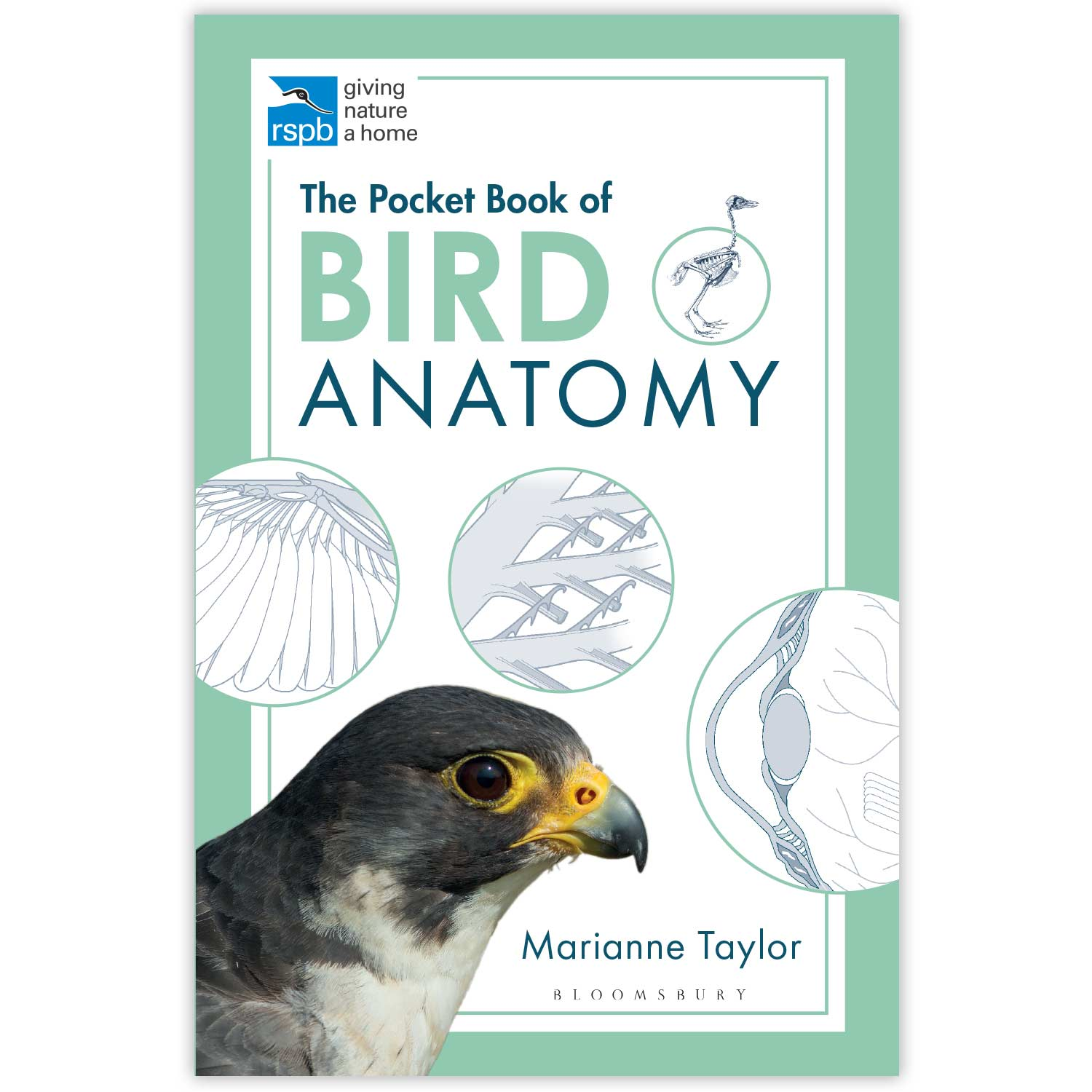 RSPB Pocket book of bird anatomy product photo