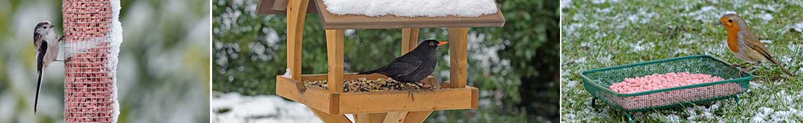 Blackbird on snowy gothic bird table, long tailed tit on mesh bird feeder with berry nibbles suet pellets