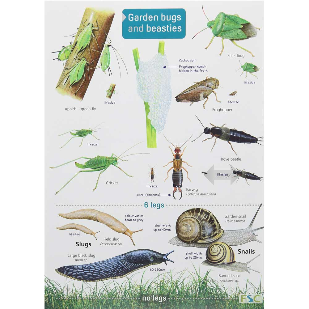Garden bugs and beasties chart product photo Default L