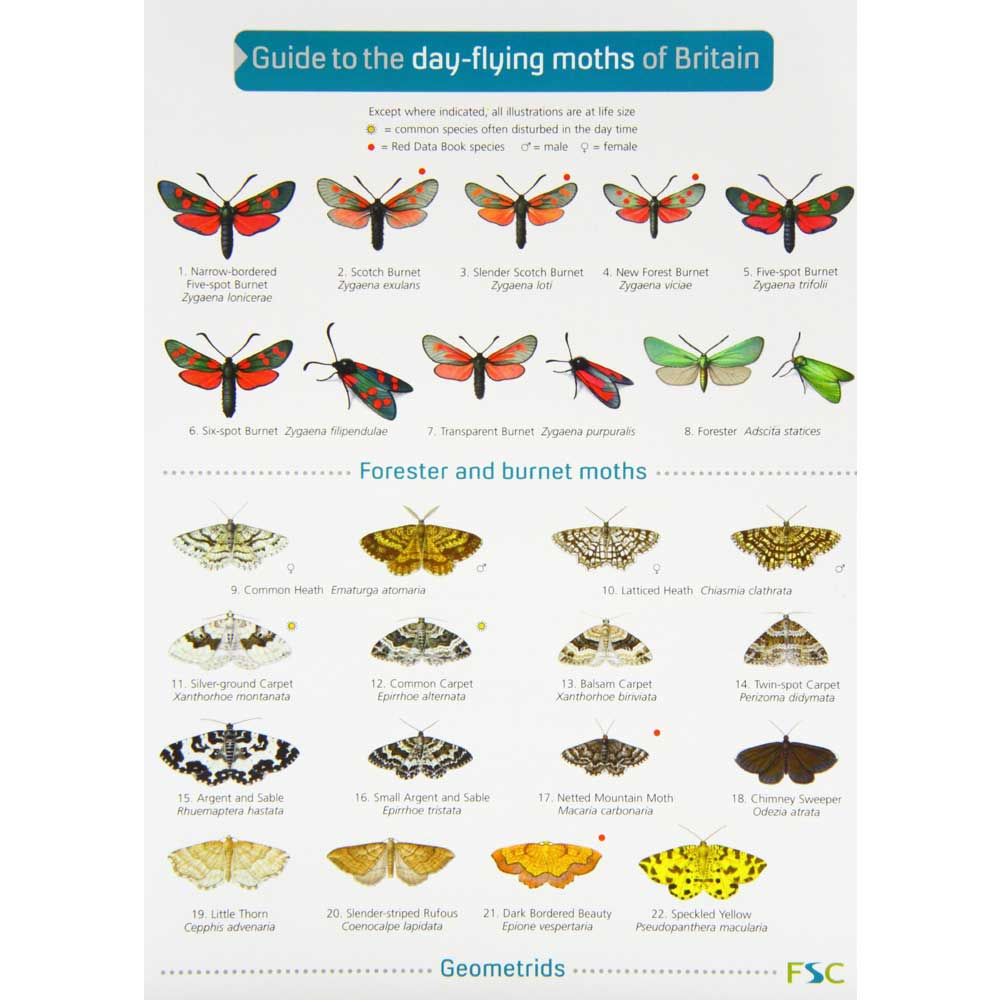 Guide to day-flying moths of Britain chart product photo
