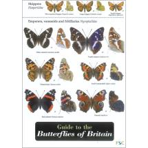 Guide to the butterflies of Britain fold-out chart product photo