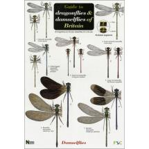 Guide to dragonflies & damselflies fold-out chart product photo