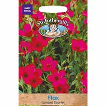 Flax (Linum) Scarlet seeds packet - 450 seeds product photo
