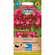 Valerian seeds packet - 100 seeds product photo