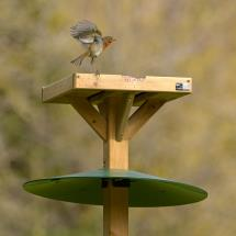 Bird table squirrel baffle product photo