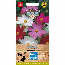 Cosmos sensation mixed seeds - for 120 plants product photo