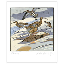 Curlews greetings card product photo