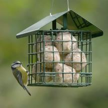 Dual suet feeder for fat balls & cakes product photo