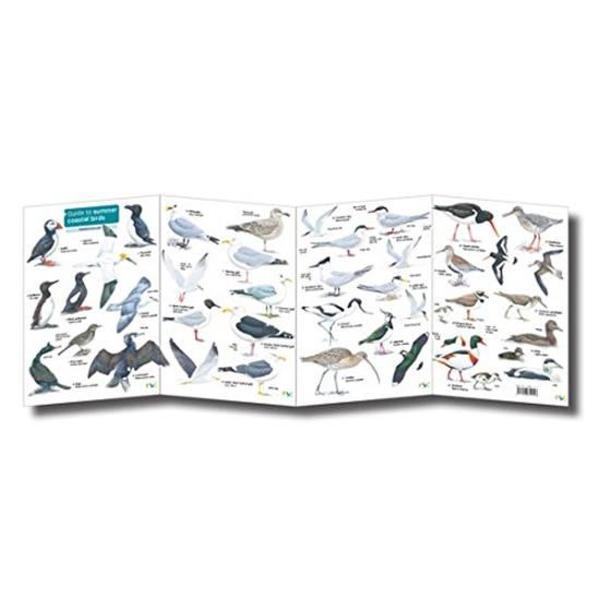 Guide to summer coastal birds chart product photo Side View -  - additional image 3 L