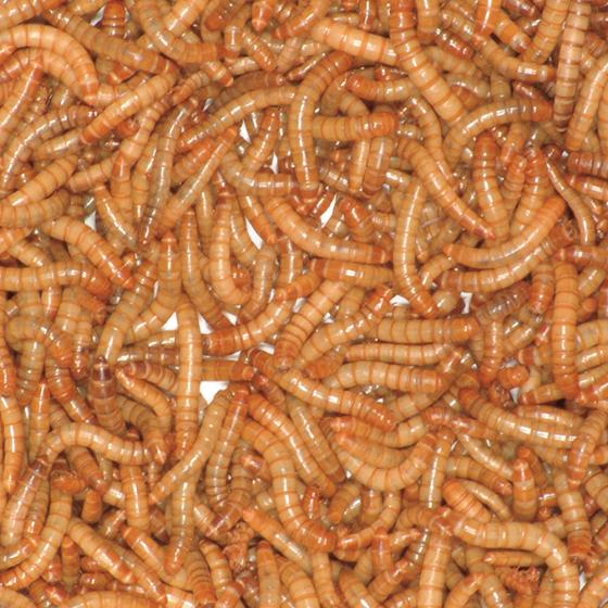 Live mealworms 500g product photo Front View - additional image 1 L