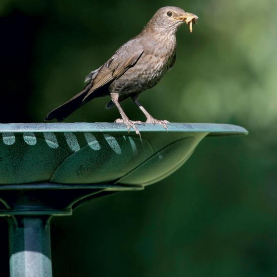 RSPB Bird bath product photo Front View - additional image 1 L