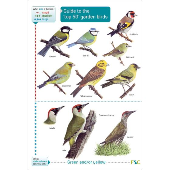 Guide to the top 50 garden birds fold-out chart product photo Default L