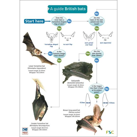 A guide to British bats fold-out chart product photo Default L