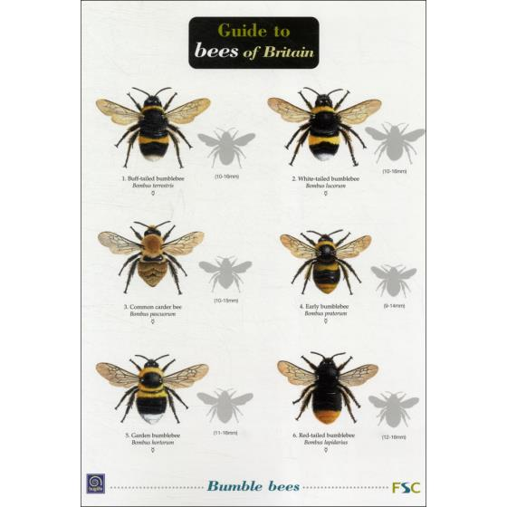 Guide to bees of Britain fold-out chart product photo Default L