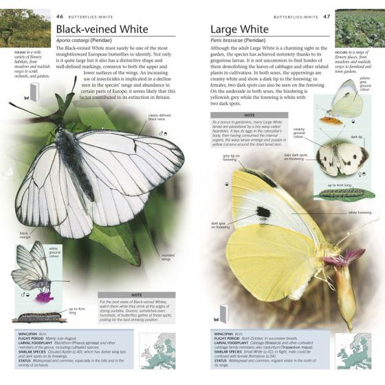 RSPB Pocket Nature Butterflies and Moths product photo Front View - additional image 1 L