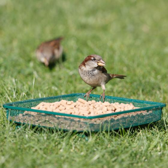 RSPB Mesh ground bird feeder product photo Default L