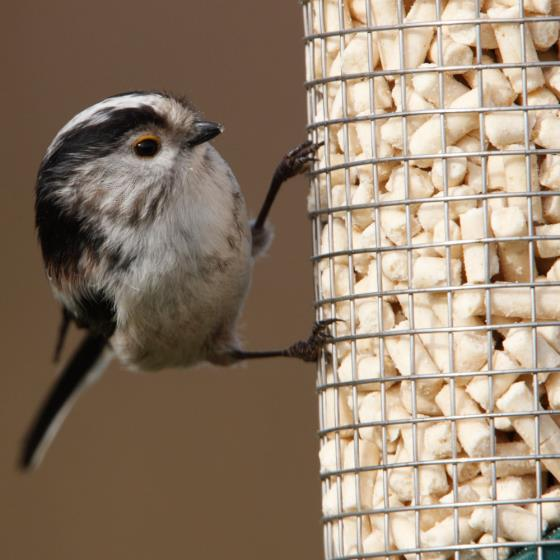 RSPB Hanging table & bird food offer product photo Back View -  - additional image 2 L