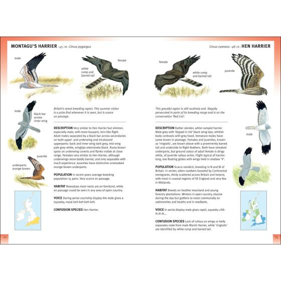 RSPB Pocket Guide to British Birds, 2nd Edition product photo Front View - additional image 1 L