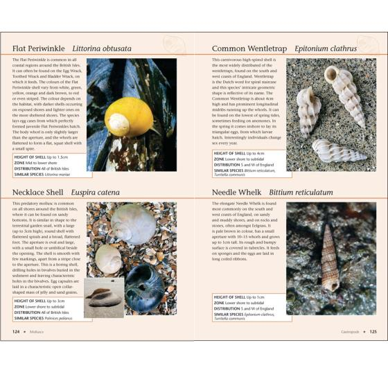 RSPB Handbook of the Seashore product photo Front View - additional image 1 L