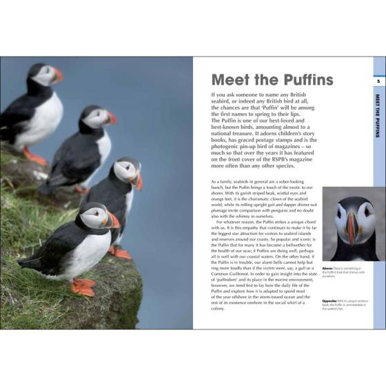 RSPB Spotlight Puffins product photo Front View - additional image 1 L