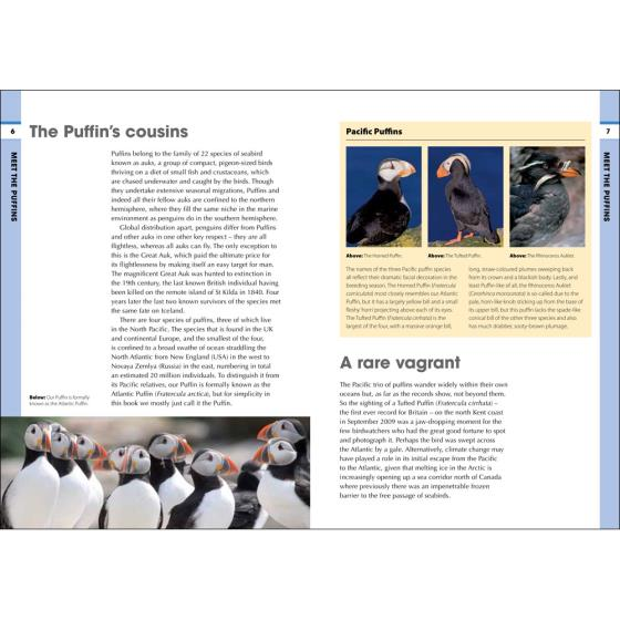 RSPB Spotlight Puffins product photo Back View -  - additional image 2 L