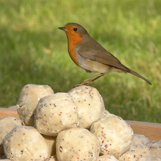 Dual suet feeder starter pack with fat balls & cakes product photo Back View -  - additional image 2 L