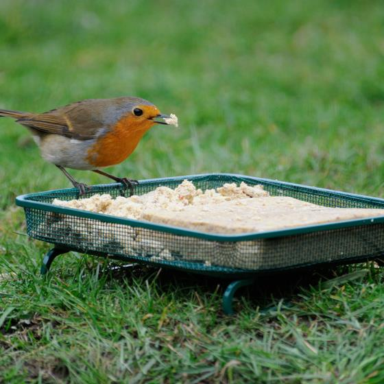 Gothic bird table & super suet cakes offer product photo Back View -  - additional image 2 L