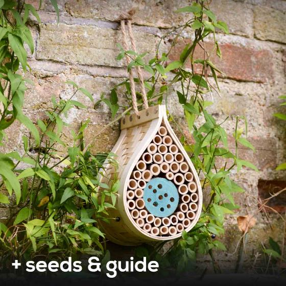 Dewdrop bee biome with seeds and guide product photo Default L