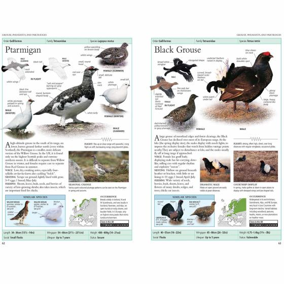 RSPB Birds of Britain and Europe, 5th edition (pub. 2018) product photo Back View -  - additional image 2 L