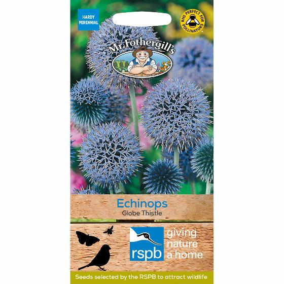 Echinops Globe Thistle seed packet - 50 seeds product photo
