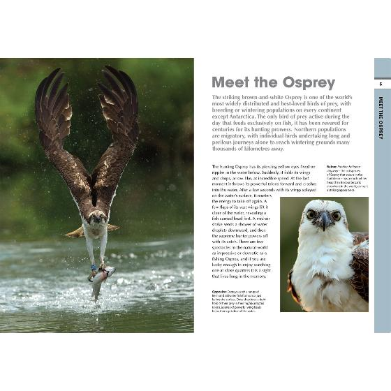 RSPB Spotlight ospreys product photo Front View - additional image 1 L