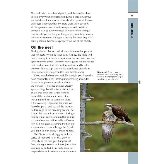RSPB Spotlight ospreys product photo Back View -  - additional image 2 L