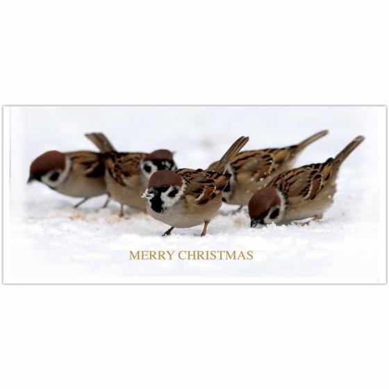A host of sparrows RSPB Christmas cards - 10 pack product photo Default L