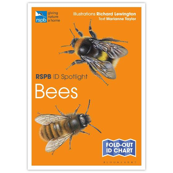 Bees identifier chart - RSPB ID Spotlight series product photo