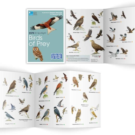 Birds of prey identifier chart - RSPB ID Spotlight series product photo Side View -  - additional image 3 L