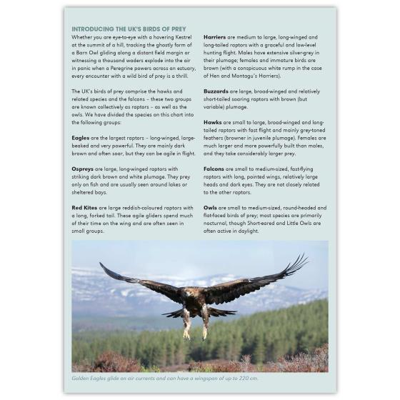 Birds of prey identifier chart - RSPB ID Spotlight series product photo Back View -  - additional image 2 L
