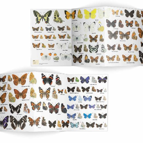Butterflies identifier chart - RSPB ID Spotlight series product photo Side View -  - additional image 3 L