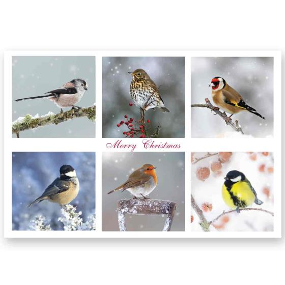 Christmas guests RSPB charity Christmas cards - 10 pack product photo Default L