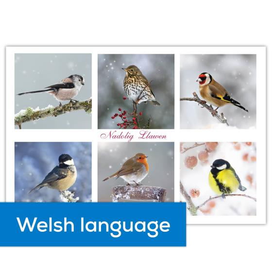 Christmas guests RSPB Welsh English Christmas cards - 10 pack product photo