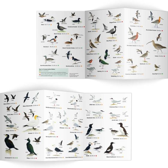 Coastal birds identifier chart - RSPB ID Spotlight series product photo Side View -  - additional image 3 L