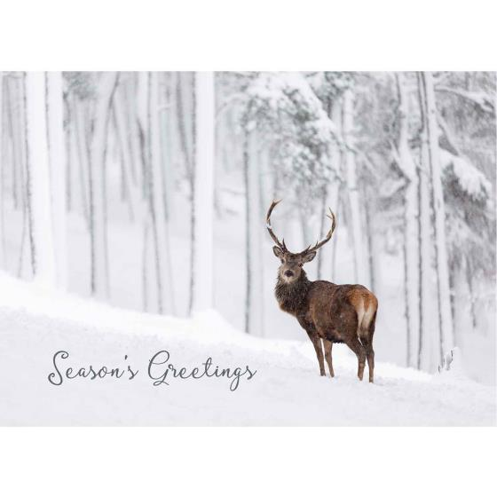 Deep and crisp and even RSPB Christmas cards - 10 pack product photo Default L