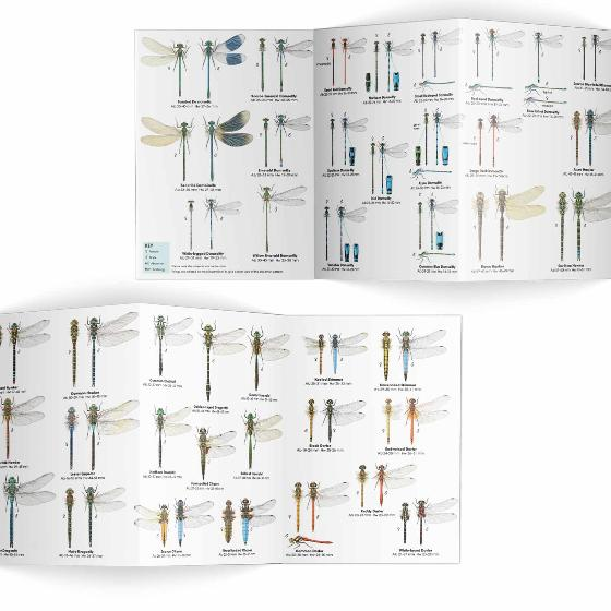 Dragonflies and damselflies identifier chart - RSPB ID Spotlight series product photo Side View -  - additional image 3 L