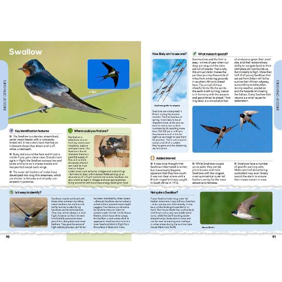 RSPB The everyday guide to British birds product photo Back View -  - additional image 2 L