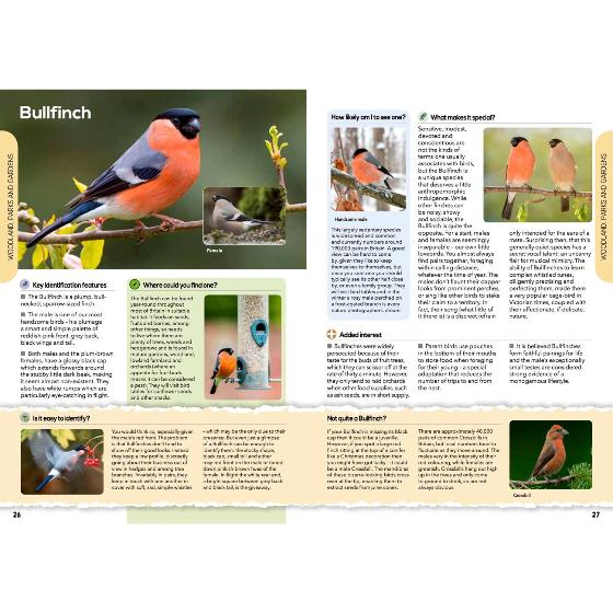 RSPB The everyday guide to British birds product photo Front View - additional image 1 L
