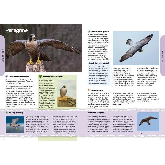 RSPB The everyday guide to British birds product photo Side View -  - additional image 3 L