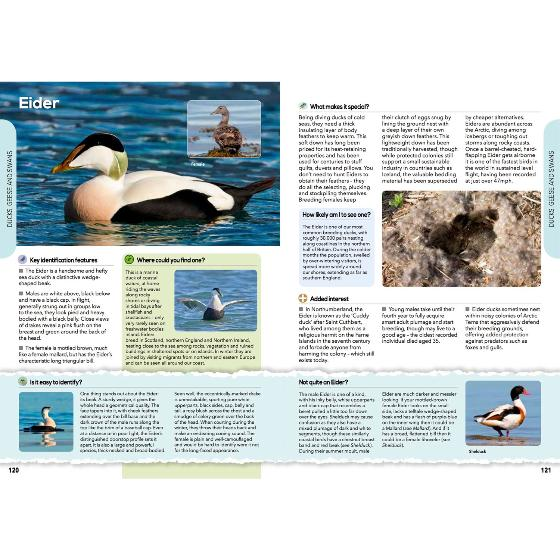 RSPB The everyday guide to British birds product photo additional image 4 L