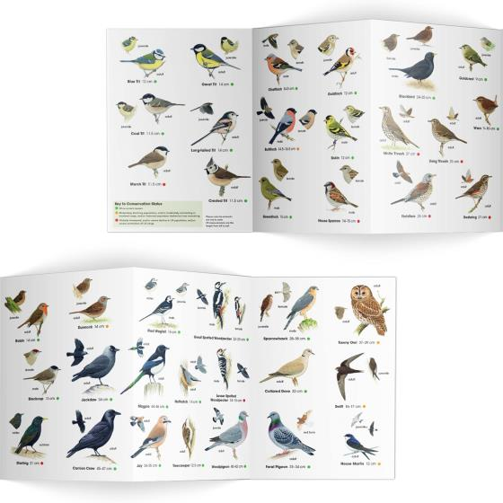 Garden birds identifier chart - RSPB ID Spotlight series product photo Side View -  - additional image 3 L