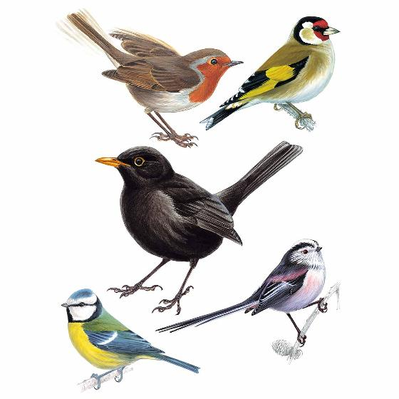 Garden birds window stickers product photo