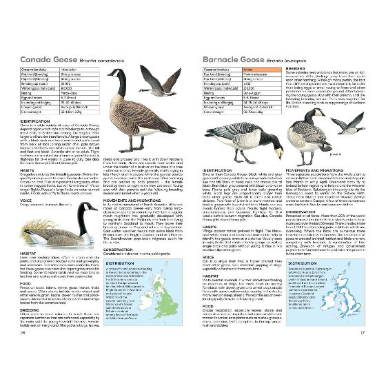 RSPB Handbook of British Birds, 5th edition product photo additional image 4 L
