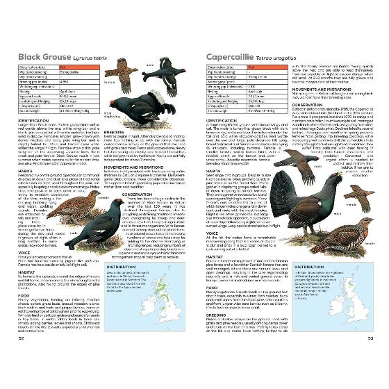 RSPB Handbook of British Birds, 5th edition product photo additional image 6 L